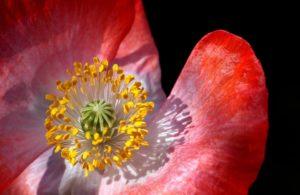 a virágpor jótékony hatásai